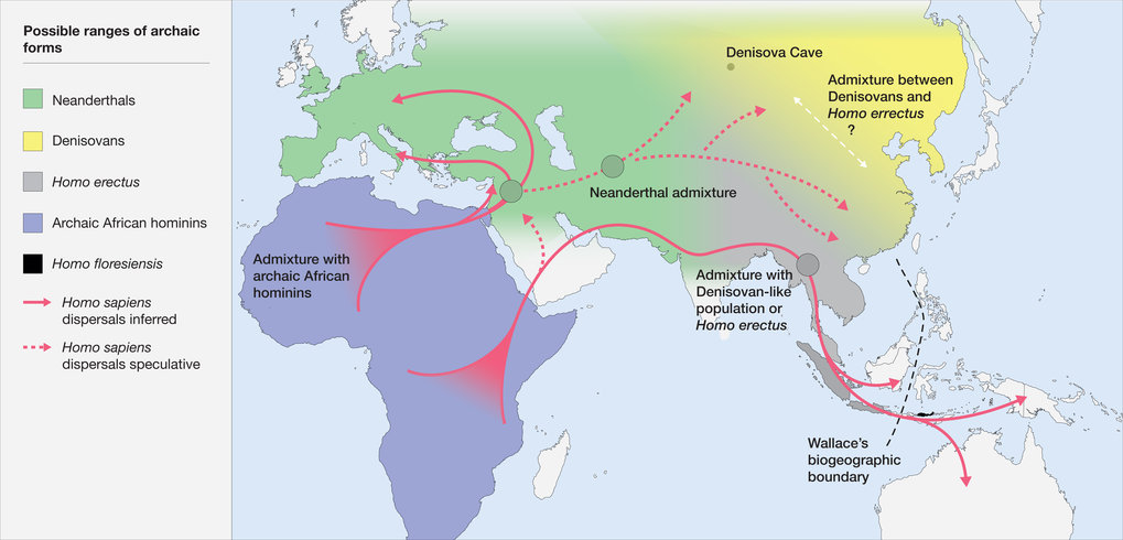 Map of the potential distribution of archaic hominins, including H. erectus, H. floresiensis, H. neanderthalenesis, Denisovans and archaic African hominins, in the Old World at the time of the evolution and dispersal of H. sapiens between approximately 300 and 60 thousand years ago