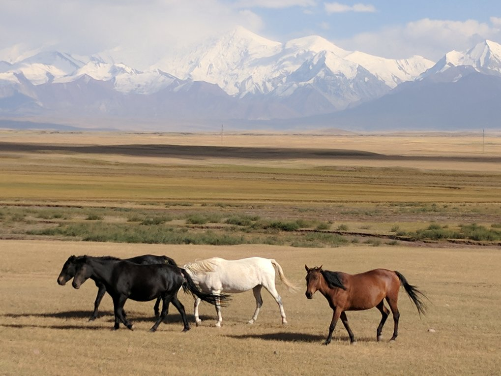 Long before the formal creation of the Silk Road, pastoral herders living in the mountains of Central Asia helped form new cultural and biological links across the region.