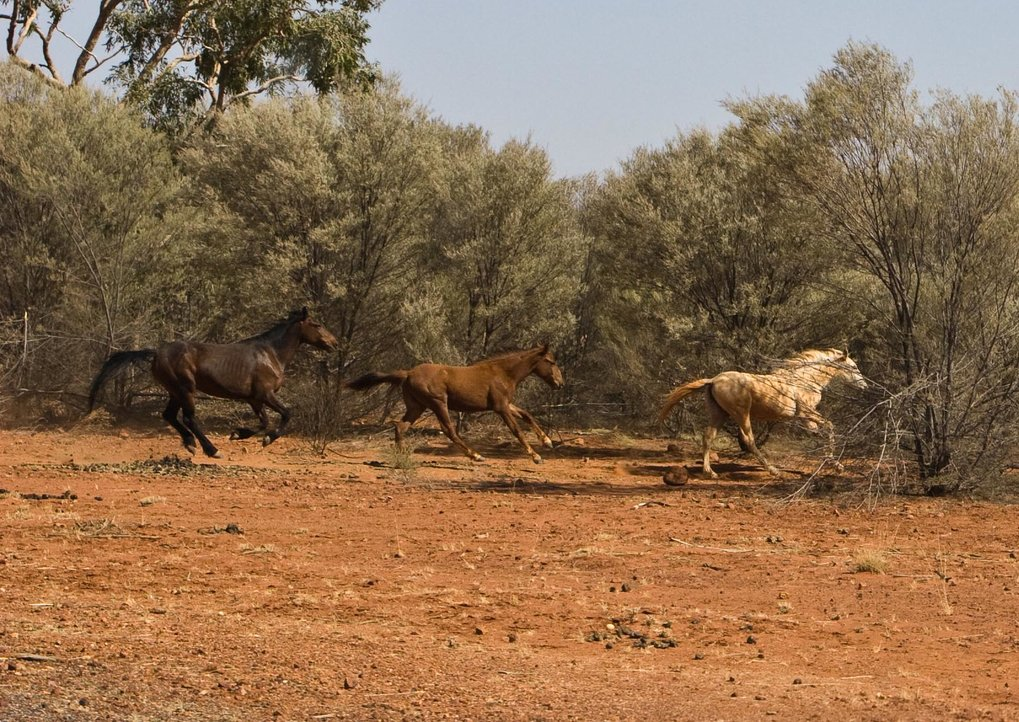 Taylor and colleagues win DAAD research award to study the early history of horses in Australia