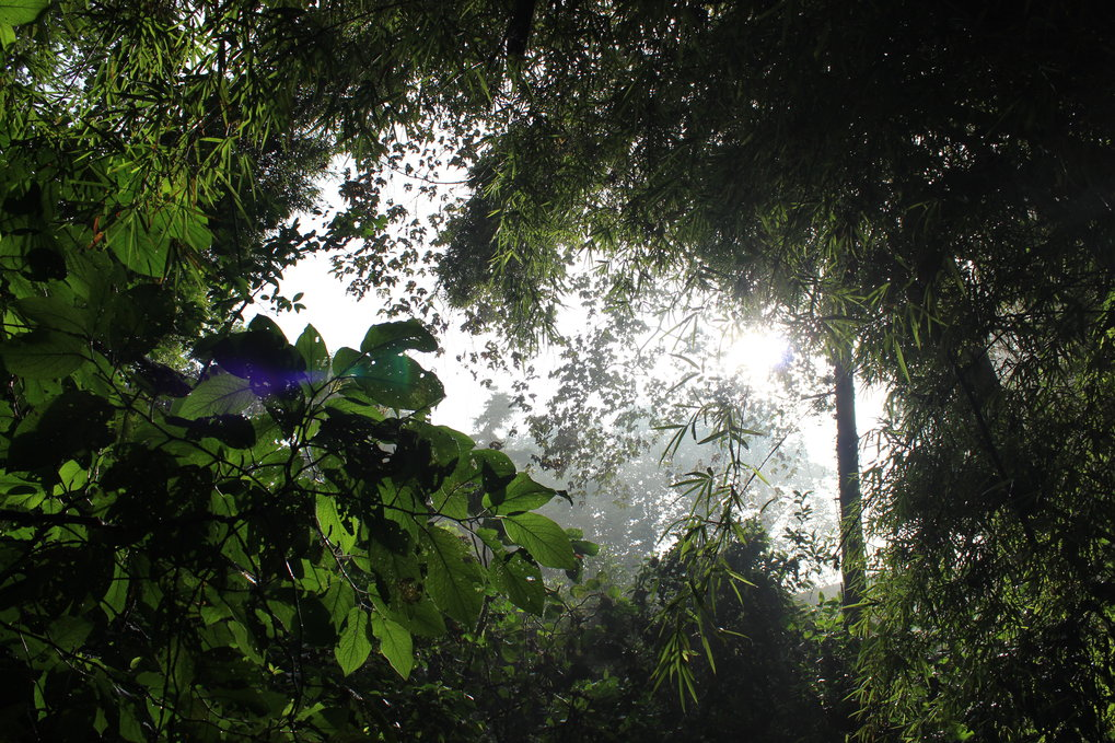 View from the canopy floor in the Cloud Forest Sanctuary, Xalapa, Mexico.