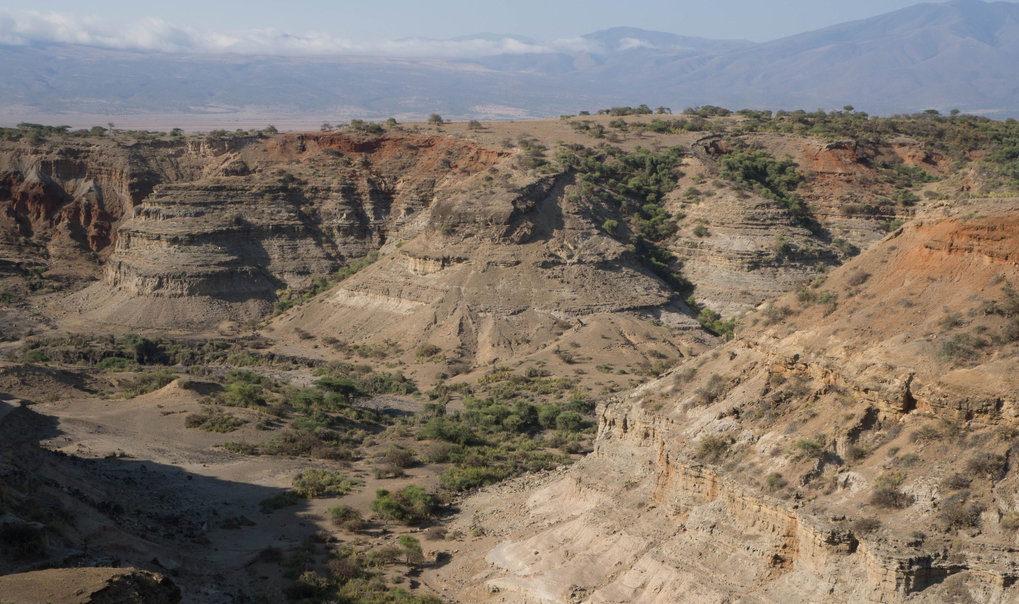 Olduvai Gorge is one of the most famous palaeoanthropological locations in Africa as a product of a series of high profile hominin fossil discoveries and its rich archaeological record which spans the past 2 million years. These characteristics mean that Olduvai Gorge is an excellent place to examine the biological and cultural emergence of our genus, <em>Homo</em>, as well as the environmental backdrop.