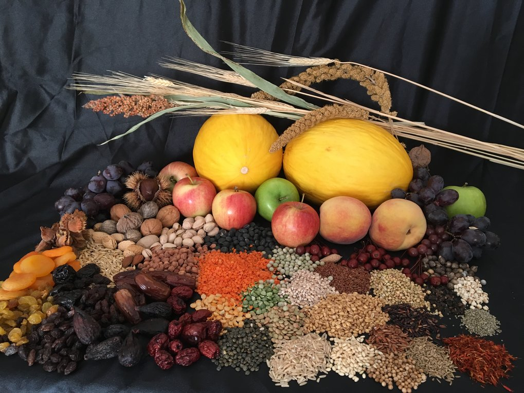 Many of the most familiar fruits, nuts, grains, and spices in your kitchen can trace at least part of their story back to the ancient Silk Road. Dr. Spengler presents the story for many for the plants depicted in this picture, relying on historical sources and recent archaeobotanical discoveries.