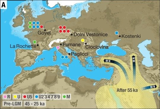 <p>The study supports a single and rapid dispersal of all non-Africans populations around 50,000 years ago not only across Asia but also into Europe.</p>