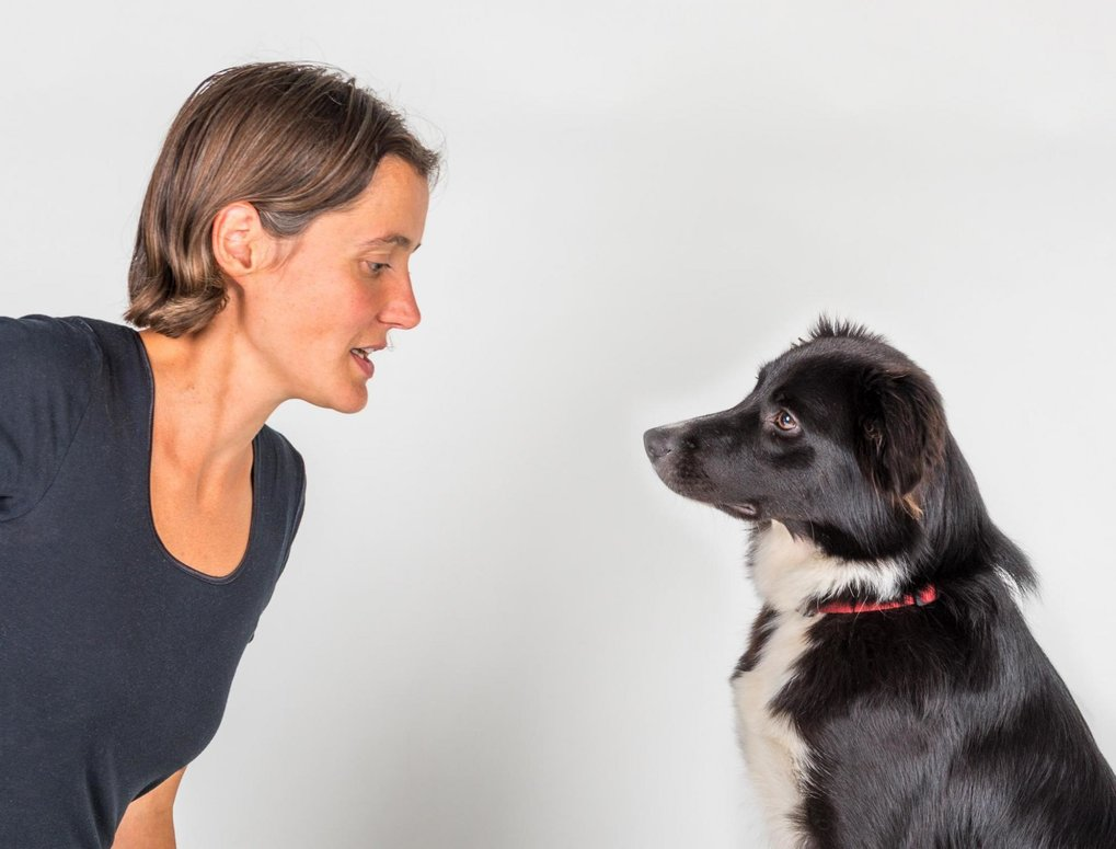 Dogs use facial expressions and body language to communicate with conspecifics and humans