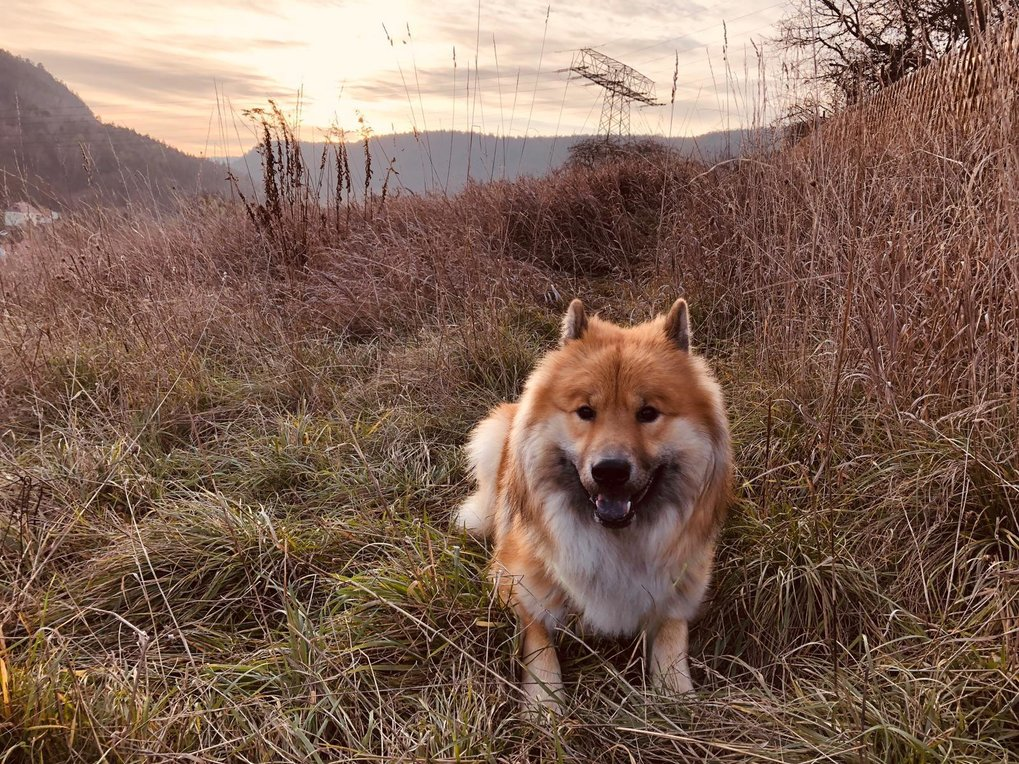 The ability to recognize dog emotions could help minimize confrontation with unfamiliar dogs
