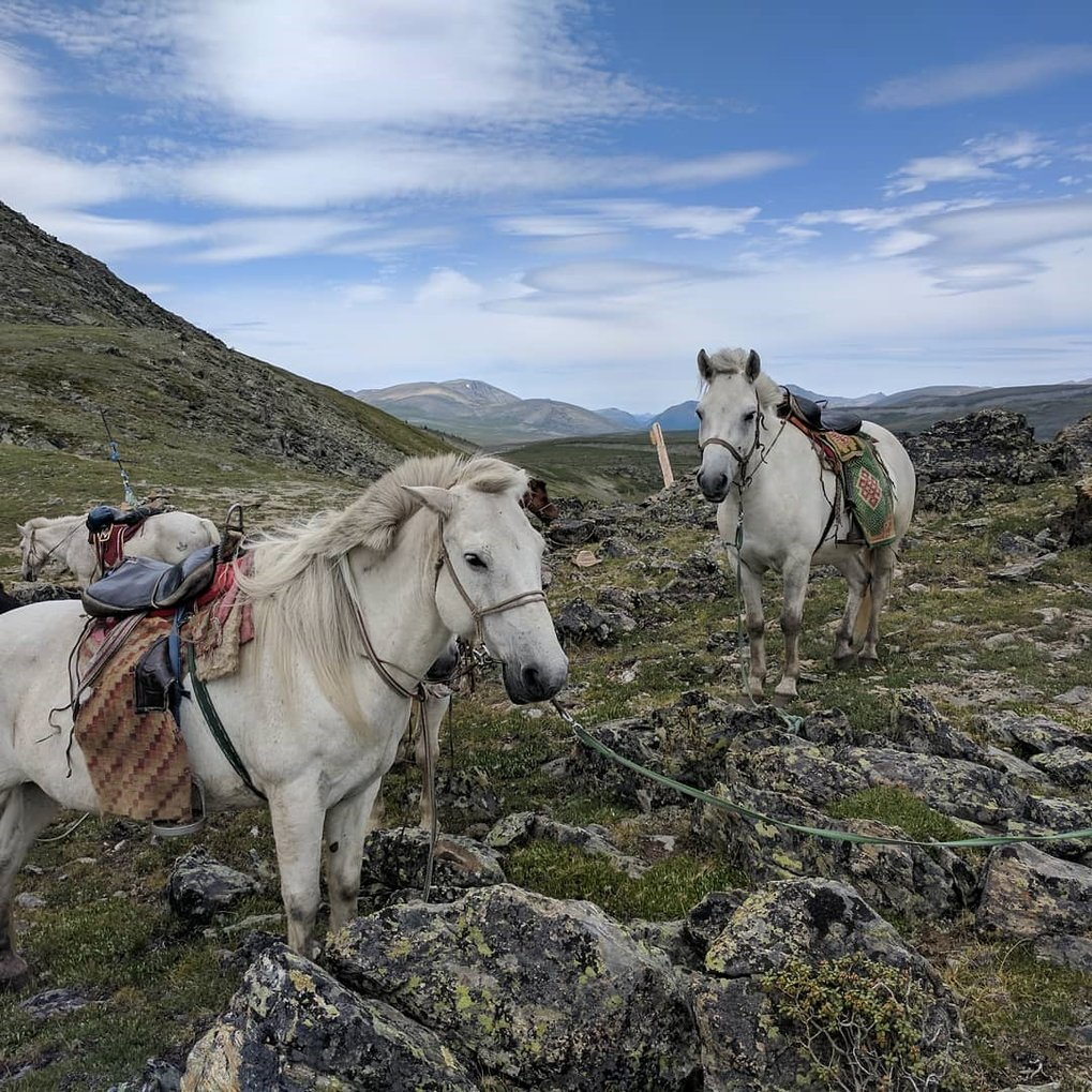 How horse riding changed the ancient economies of eastern Eurasia