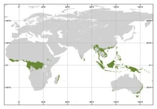 Tropical rainforests are some of the most diverse terrestrial environments in the world, yet the extent of past human interaction with these habitats has been debated. In this project we apply stable isotope and dental calculus approaches in order to understand the degree of human rainforest reliance, in different parts of the world and different time periods, and gain more detailed insight into the strategies used by our ancestors to survive in these environments.