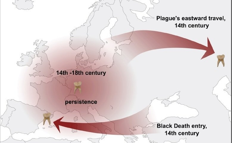 A single strain of plague bacteria sparked multiple historical and modern pandemics. This was revealed by the analysis of three reconstructed historical genomes from the causative agent of plague, Yersinia pestis, isolated from plague victims between the 14th and 16th century.