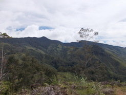 "<span style=""font-size: 10.0pt; font-family: 'Tahoma','sans-serif'; color: black;"">Montane rainforest in the Central Highlands of New Guinea</span>"