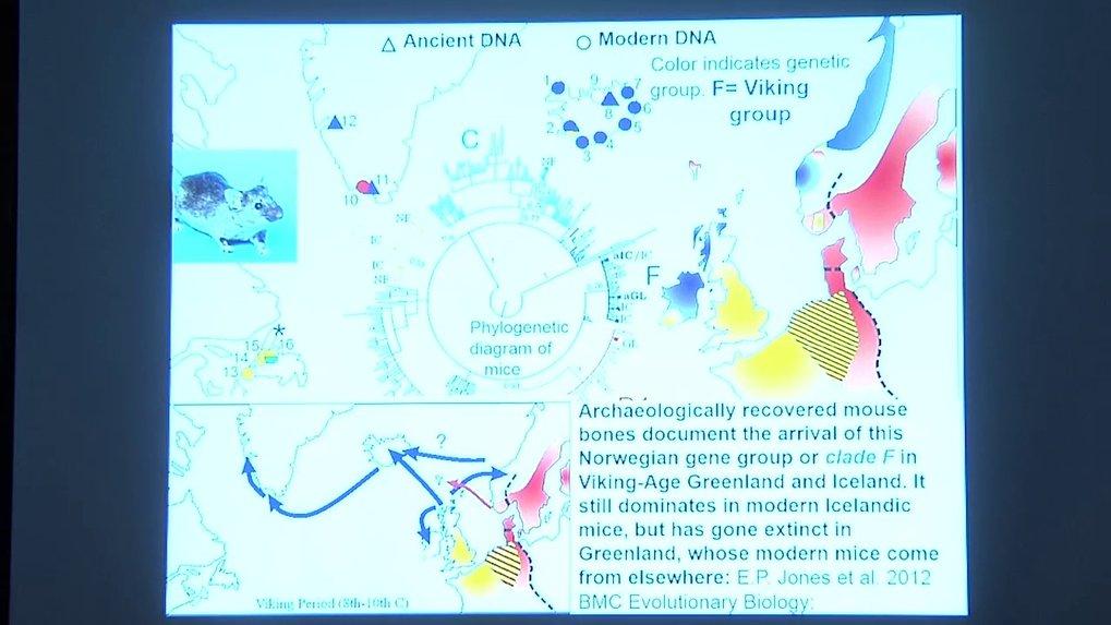 MHAAM Max-Planck - Harvard Research Center   Max Planck ...
