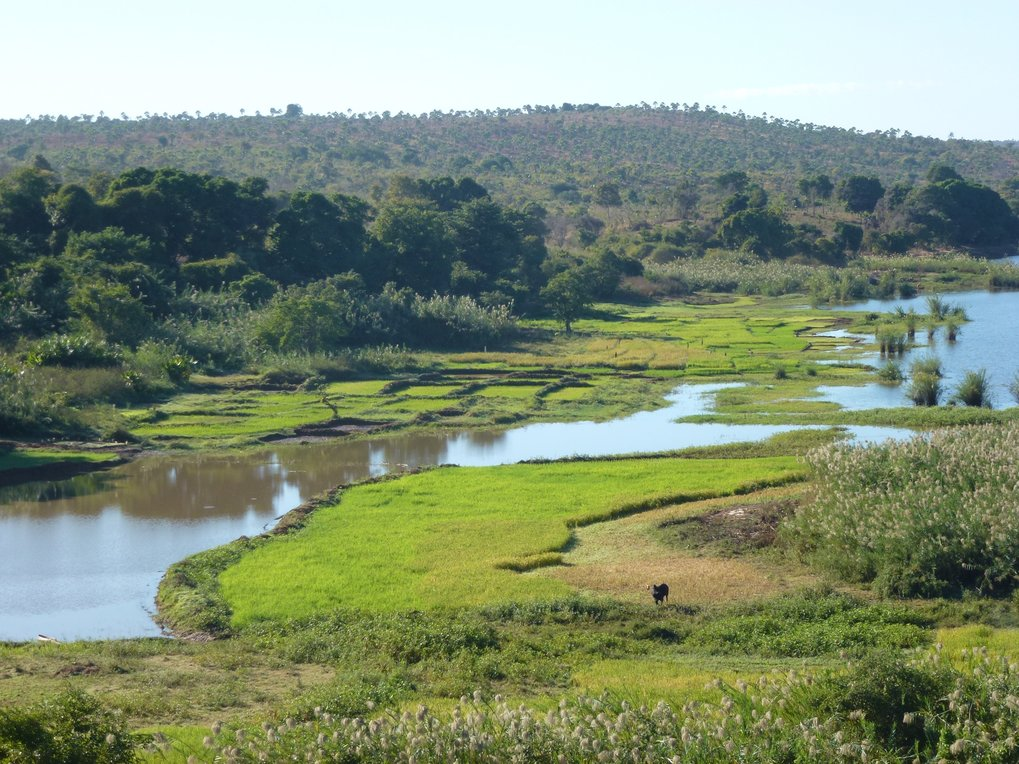 Madagascar rice fields