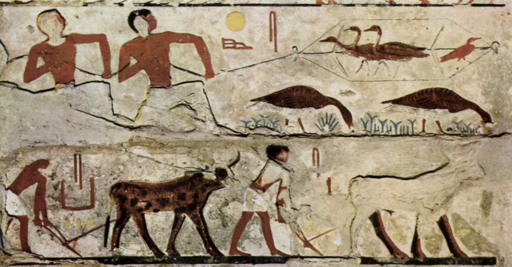 Humans have had an impact on ecological systems for several thousands years - for example through hunting, agriculture, and the domestication of animals. This relief in the burial chamber of Nefermaat I shows the hunting of game birds (geese) and plowing of a field with cattle in Ancient Egypt about 2,500 BC.