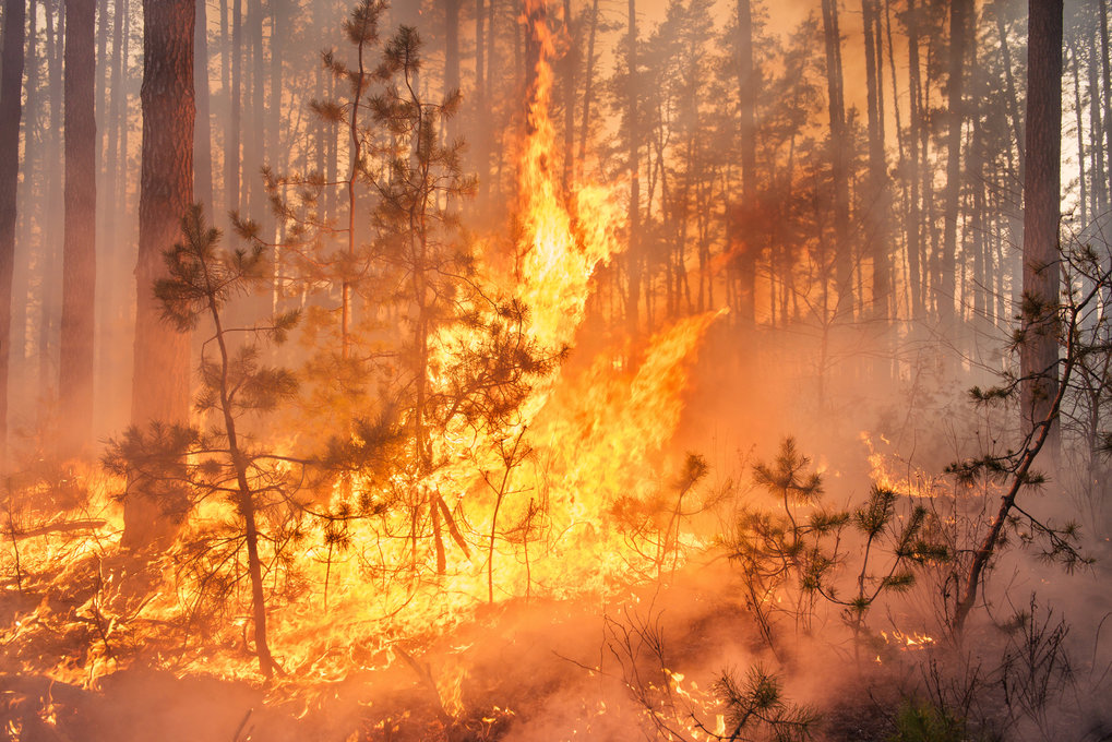 Anthropogenic fire has played a long term role in altering Earth's ecosystems