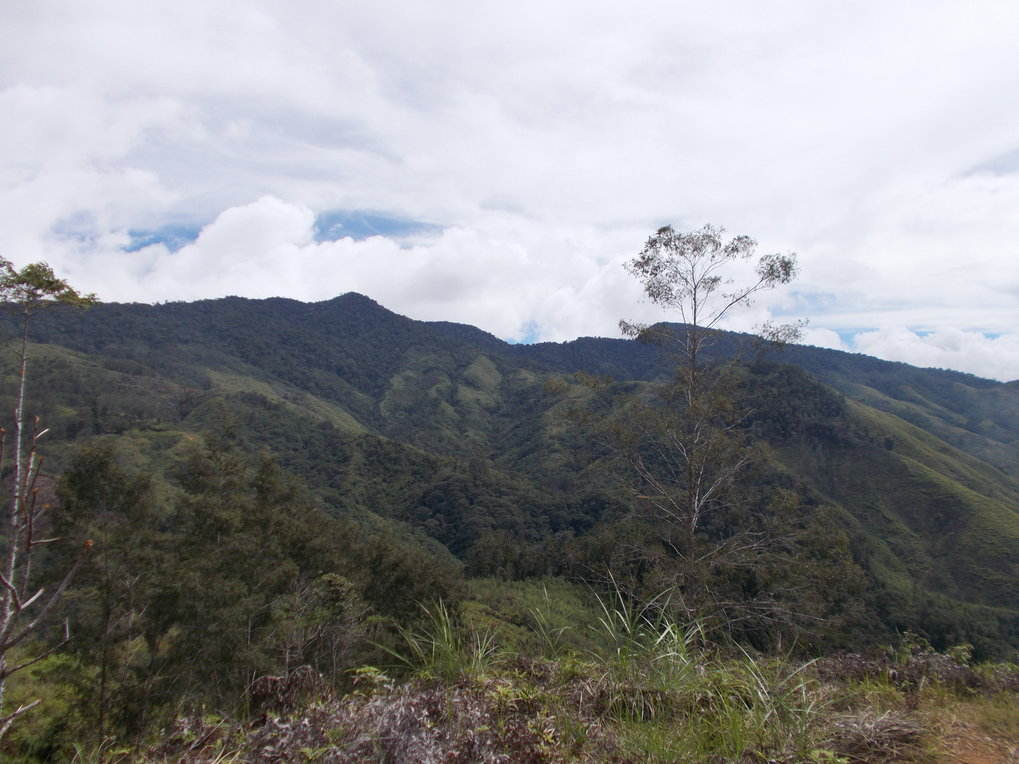 Montane rainforest in the Central Highlands of New Guinea