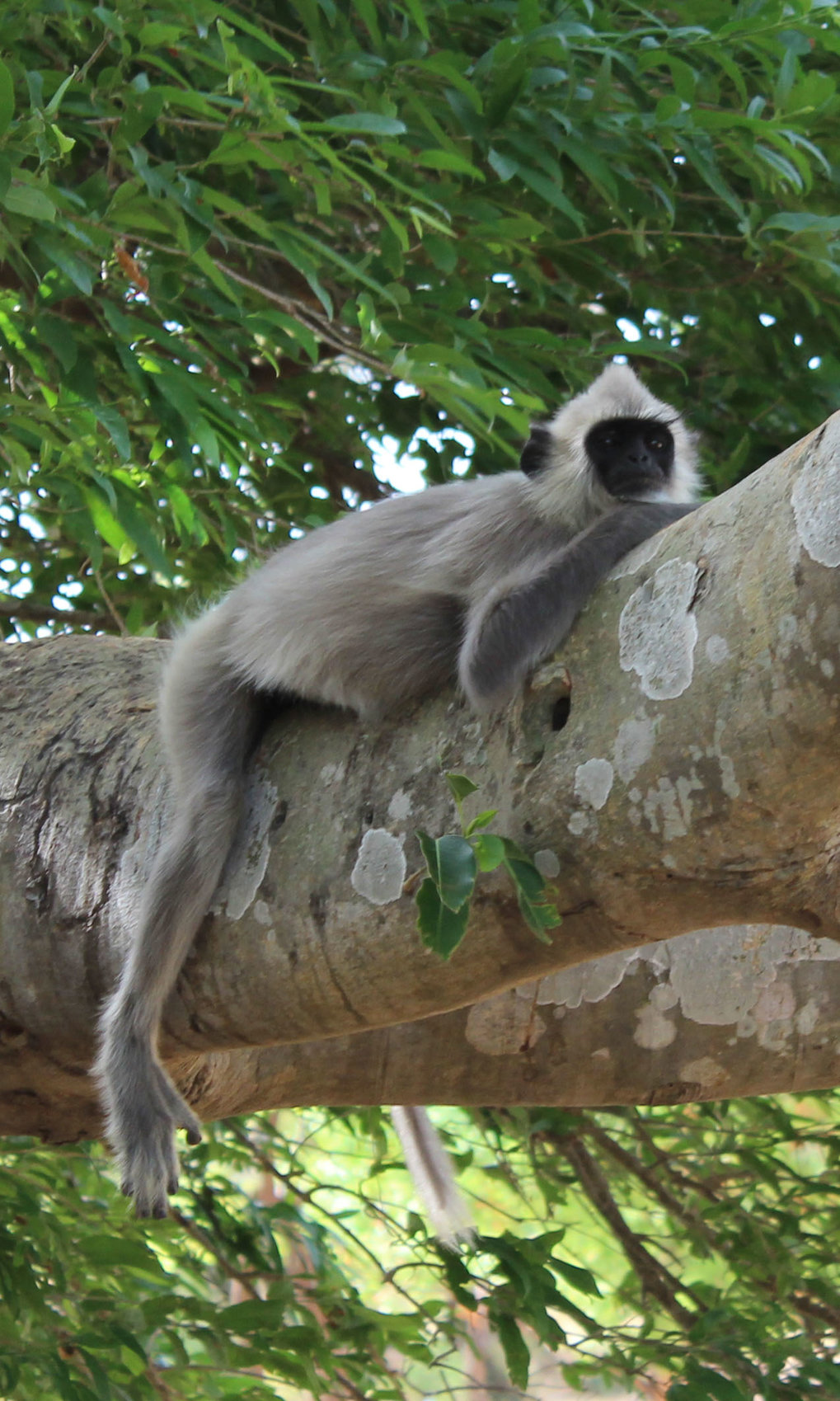 A new paper published in the American Journal of Primatology provides a comprehensive plant reference dataset for a forest habitat of three primate species in Sri Lanka.