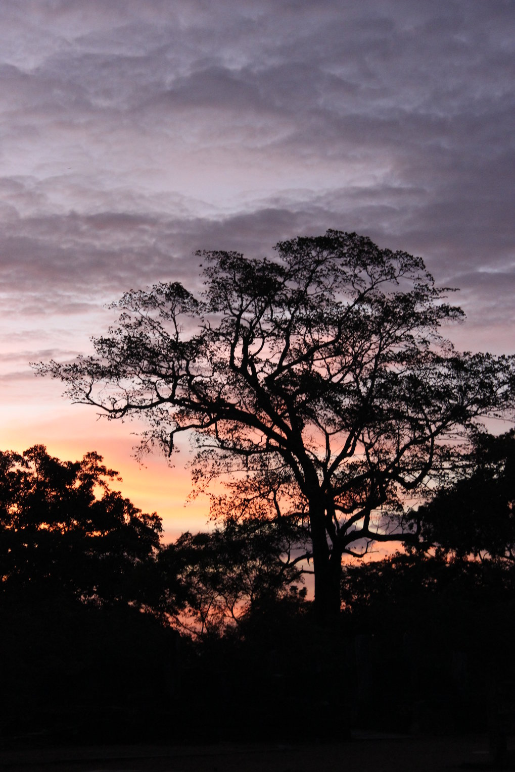 View from the ancient city of Polonnaurwa into Sri Lankan Dry Zone tropical forest at dusk.