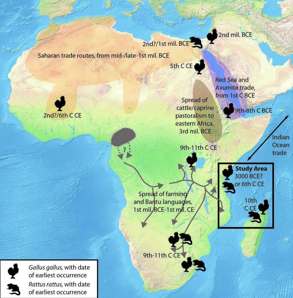 Map showing the findings of this study (black box) and the context of arrivals and spread of Asian fauna in other parts of Africa.