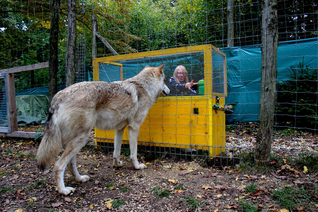 The study showed that wolves are able to make causal inferences about the location of hidden food, a long-open question.