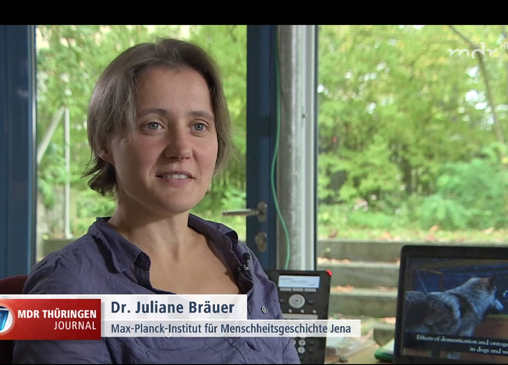 Juliane Bräuer and Russell Gray discuss Dr. Bräuer's recent paper comparing wolf and dog cognition with MDR Thüringen Journal. The study showed that dogs seem to have lost some problem solving abilities during domestication.
