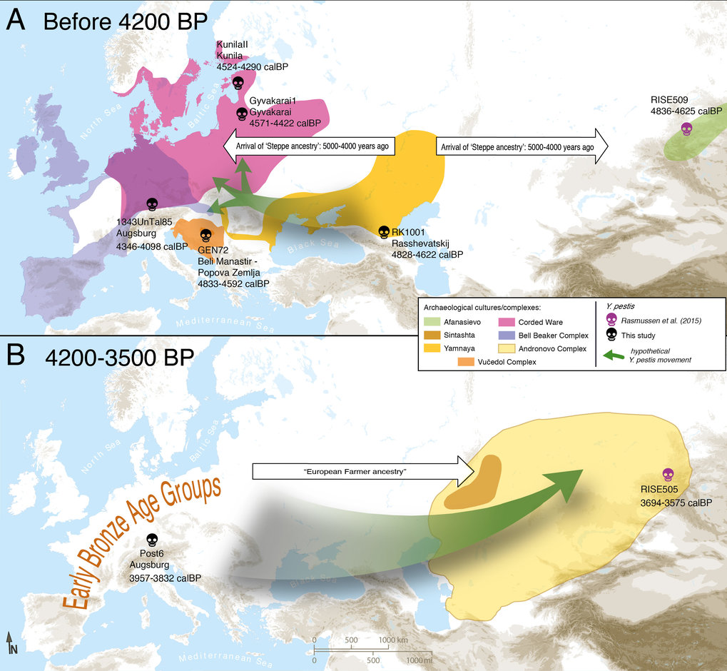 Map of proposed Yersinia pestis circulation throughout Eurasia. A) Entrance of Y. pestis into Europe from Central Eurasia with the expansion of Yamnaya pastoralists around 4,800 years ago. B) Circulation of Y. pestis to Southern Siberia from Europe. Only complete genomes are shown.