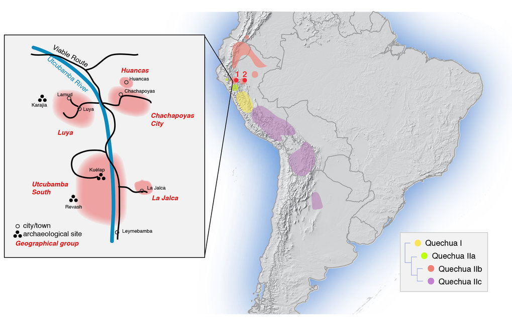 <p>Map of sampling locations and approximate distribution of sub-branches of the Quechua language family, as traditionally classified. Red dot 1 marks the sampling locations in the Amazonas region (Chachapoyas City, Luya, Huancas, Utcubamba South, La Jalca); red dot 2 marks that in the San Martín region (Lamas, Wayku neighbourhood). The inset zooms in on the sampling locations in Amazonas.</p>