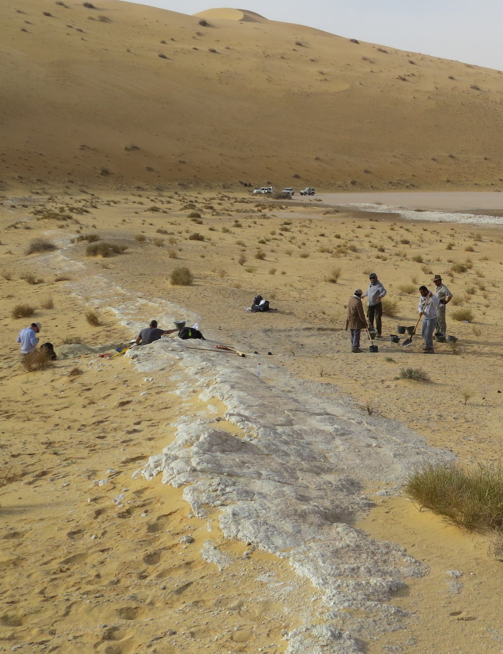 General view of the excavations at the Al Wusta site, Saudi Arabia.  The ancient lake bed (in white) is surrounded by sand dunes of the Nefud Desert.