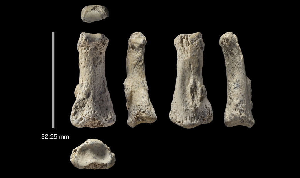 The first Homo sapiens fossil discovery from Saudi Arabia dates to 90,000 years ago during a time when the region's deserts were replaced by grasslands.