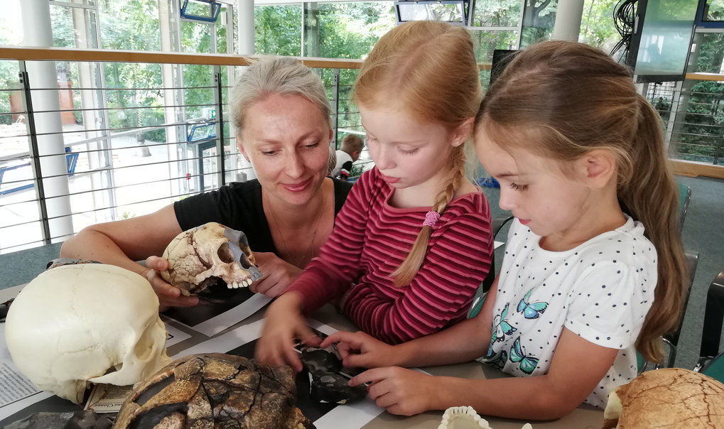 A group of pre-school children from the Dualingo Kindergarten visited the MPI for the Science of Human History at the beginning of June. Jana Zech and her colleagues have explained to the children how and what archaeologists research. Picture: skull models of various primitive human beings called Hominins.