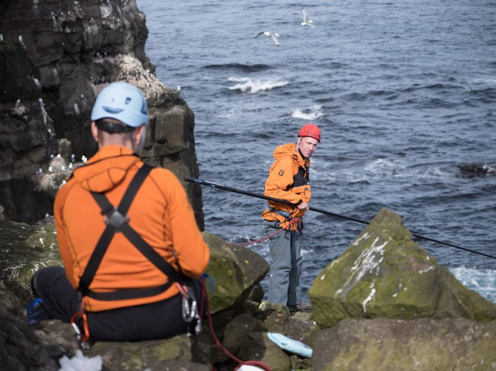 <p>Lindi Þórarinsson from the Northeast Iceland Nature Research Centre, and Norman Ratcliffe from the British Antarctic Survey catching guillemots off the cliff of Grimsey.</p>