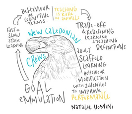 The Spectrum of Teaching in Humans and Other Animals - Virtual Workshop